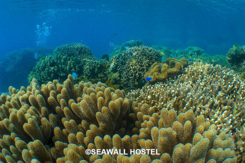 宮城海岸 サンゴ
